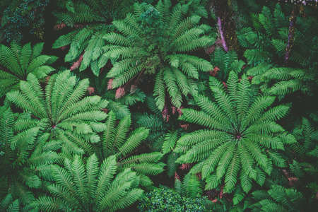 Lush green ferns in a rainforest - top down view Stock Photo