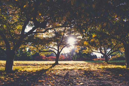 Amazing landscape - sun shining through autumn tree branches at sunset