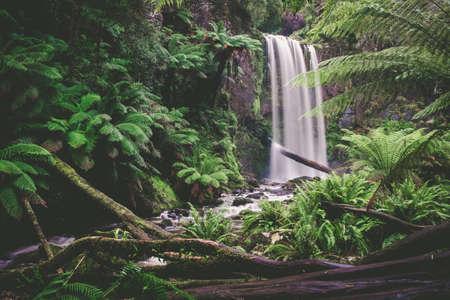Scenic waterfall in a beautiful rainforest