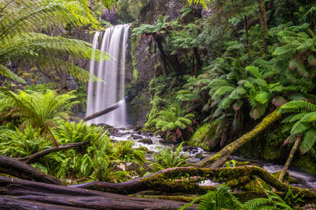 Hopetoun falls in a lush green rainforest of the Great Otway National Park in Victoria, Australia