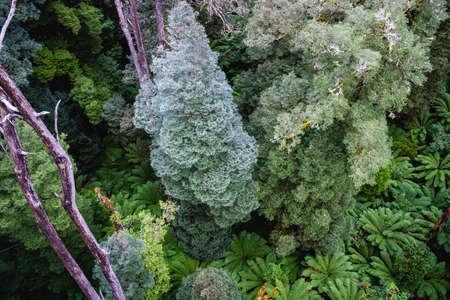 Lush green trees and ferns in Australian rainforest Stock Photo