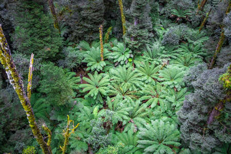 Ferntrees in a rainforest - Great Otway National Park in Victoria, Australia Stock Photo