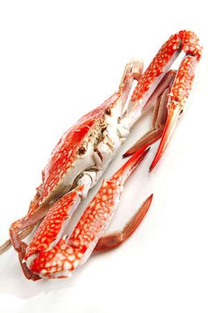 sear: single sear orange crab over white background