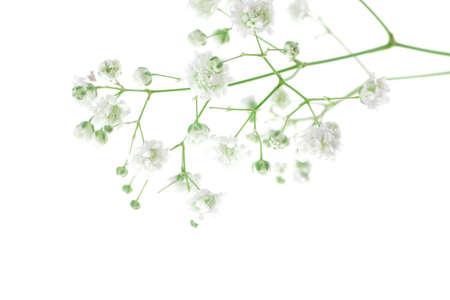 peque�as flores blancas aisladas en blanco Foto de archivo - 7994265