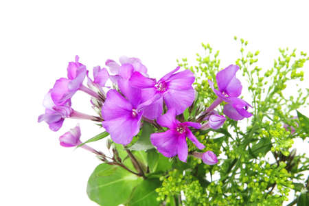 flowers : small bouquet of pansy flowers with green grass isolated over white background Stock Photo - 9082440