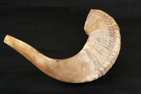 ram: ram horn ( shofar ) isolated over black background
