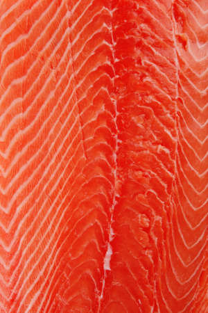 raw salmon fillet isolated over white background photo