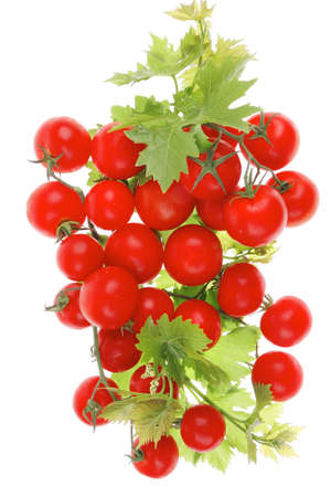 raw fresh cherry tomatoes with green leaves on branch isolated over white background photo