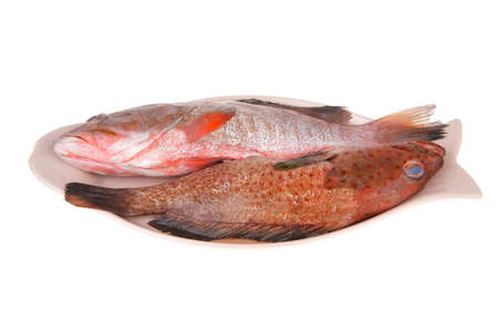 set of fresh raw fish on plate over white background Stock Photo - 20565481