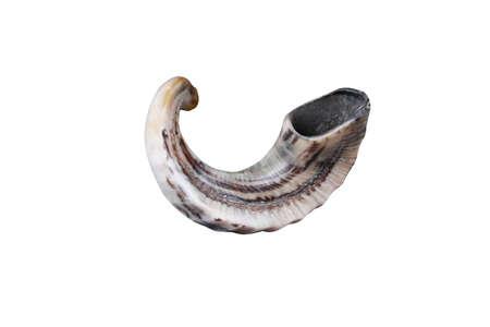 shofar: ebraico shofar piccolo corno isolato su sfondo bianco