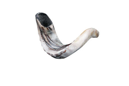 jewish small horn shofar isolated on white background Stock Photo