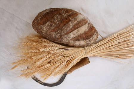 spica: bunch of mown wheat ears with vintage handmade reaper hook sickle and rye dark french fresh bread loaf on white linen tablecloth