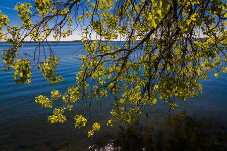 Tree branch on Lake Monona Фото со стока - 108857040