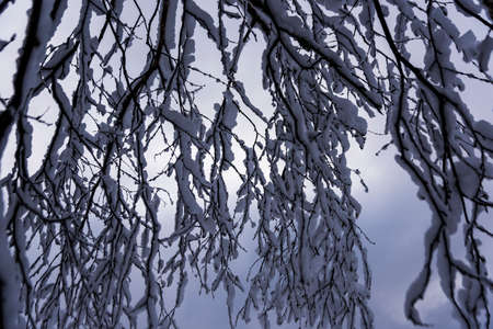 Snow covered trees in Northern Wisconsin
