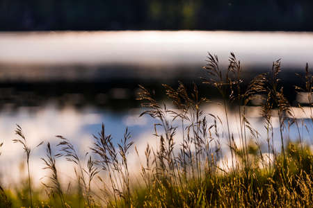 Wild grass along the shore of Spider Lake in Northern Wisconsin