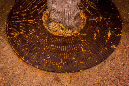 Tree grate covered with leaves 報道画像