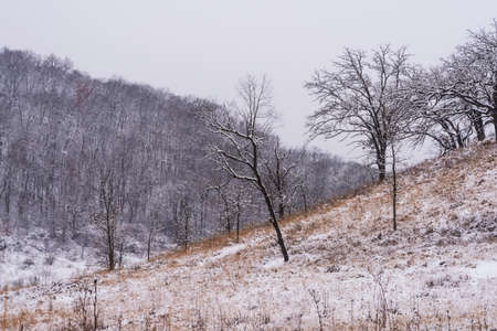 The prairie, trees and hills of the Pleasant Valley Conservancy in Southern Wisconsin. Фото со стока
