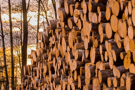 Log piles at a northern Wisconsin logging operation.