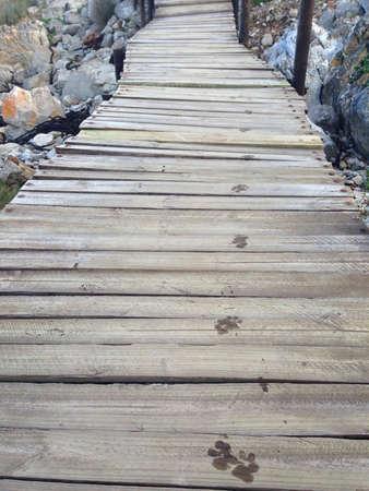 huellas de perro: Huellas de perro en un puente de madera en una ladera rocosa Foto de archivo