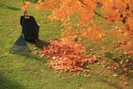 autumn dead leaves and rake photo