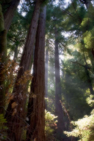 Muir Woods Stock fotó