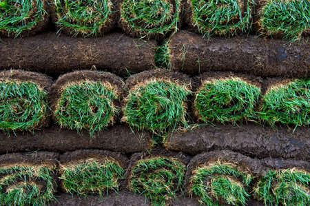 An image of bright green rolls of sod