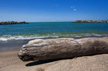 Driftwood laying on the beach with view of water