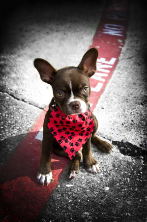 Image of a cute puppy wearing a red bandana sitting on a fire lane