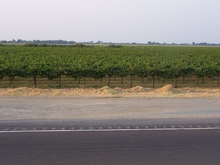 wine road: Ortchard of grapes