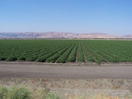 Farm crops Stock Photo
