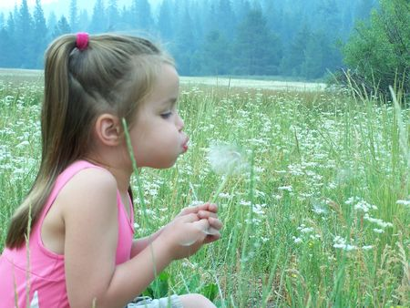 Girl blowing on dandelion Stock Photo