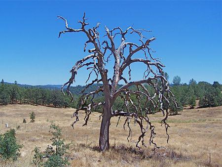 Old bare tree Stock Photo