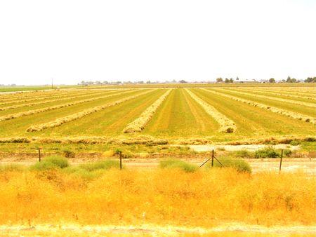 Plowed field Stok Fotoğraf