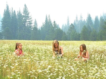 Three girls in a meadow
