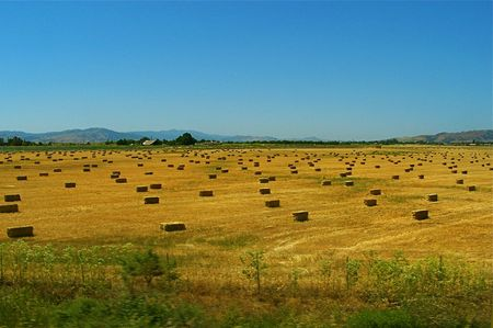 Field with bails of hay