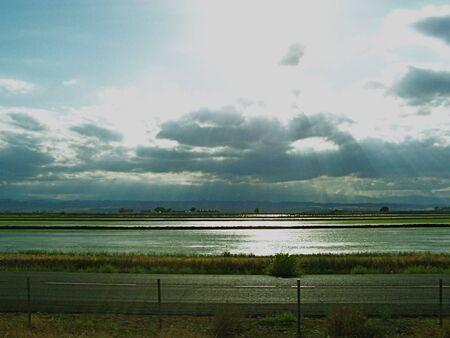 Sunshine on rice field