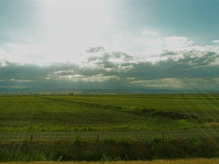 Sunshine on rice field photo
