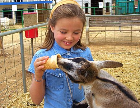 smiling goat: Young girl feeding goat