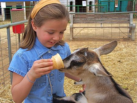 Young girl feeding goat