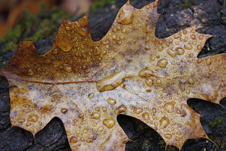 Fallen leaf with water droplets