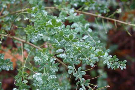 underbrush: Forest underbrush Stock Photo