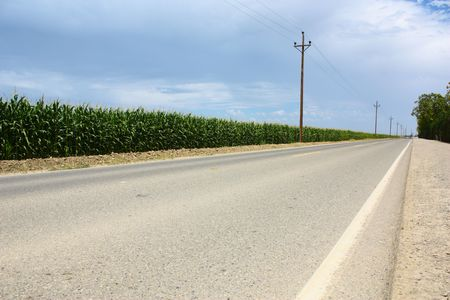 telephone poles: Road along corn field with telephone poles