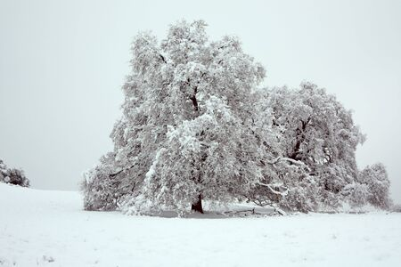 Tree covered in snow and ice Stock Photo - 6076769