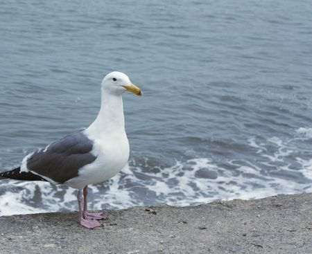Sea gull by the sea