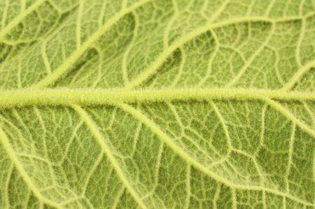 Close-up of large leaf Stock Photo - 6993039