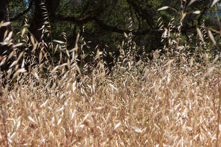 cultivate: Close-up of Tall Overgrown Brown Weeds Stock Photo