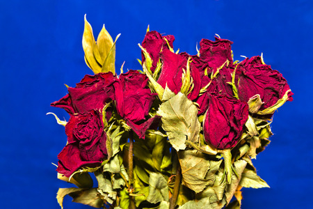 Beautiful Bouquet of Bright Red Roses With Blue Background