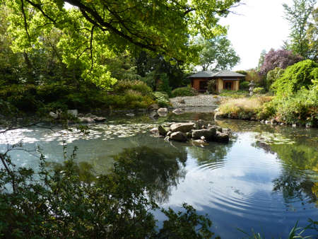 Japanese Garden, exotic plants and pond
