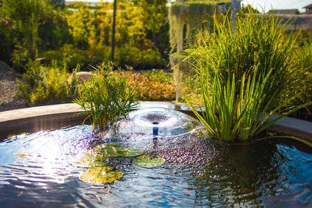 lilypad: Small fountain in the garden