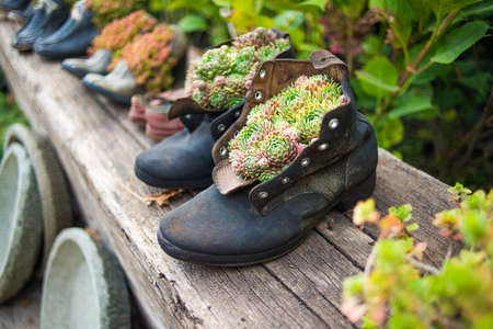 Old boots used as flower pots photo
